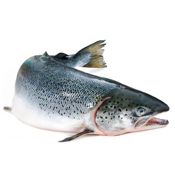 Cá hồi tươi nguyên con